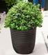 "Heidelbeer-Hecke ""BERRYBUX®"",3Pflanzen (3)"