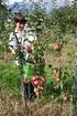 Lubera Apfel Paradis® Sierra® (3)