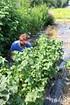 Lubera Johannisbeere Cassissima®Greenlife (3)