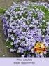 Mein schöner Garten Bienenfreundliches Staudenbeet, 21 Pflanzen (3)