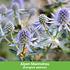 Mein schöner Garten Schneckensicheres Staudenbeet, 20 Pflanzen (3)