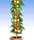 Obst für Balkon & Terrasse,5 Pflanzen (3)
