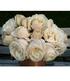 "Parfum-Rose ""Princesse Astrid®"",1 Pflanze (3)"