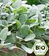 """Pflanzenmix für Hochbeete """"BIO Kräuter"""",6 Pflanzen (3)"""