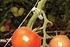 Rion Tomaten-Rank-Kit, 6 Stk. (3)