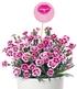 """Stauden-Nelke """"Pink Kisses®"""",3 Pflanzen (3)"""