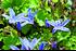 Staudenbeet Ausgewogener Andrang, 12 Pflanzen (3)