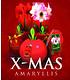 """Ungefüllte Amaryllis """"Red Lion"""" mit Geschenkbox,1 Zwiebel (3)"""