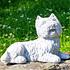 Yorkshire Terrier (3)